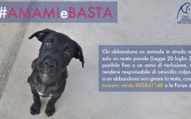 #amamiebasta, campagna Anas contro l'abbandono degli animali