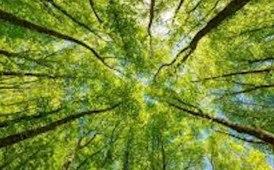 Compensazione emissioni di carbonio, Webfleet Solutions sostiene Justdiggit